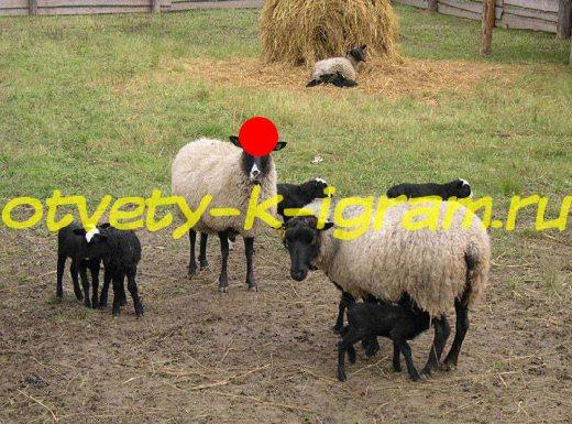 количество романовских овец в россии арт-терапии ММОМА Студии